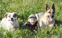 Relationship Between A German Shepherd And Children