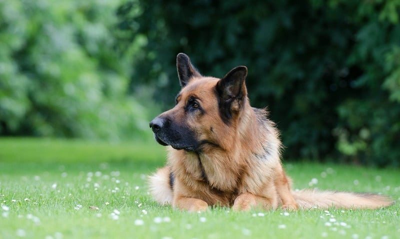 How much will a GSD cost?