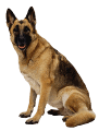 German Shepherd Guide