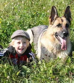 german shepherd and children